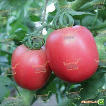 Камелот (LS 1264) F1 семена томата дет. среднего 110-120 дн. слив. 90-100г роз. (Lucky Seed)