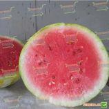 ЛС 1551 F1 (LS 1551 F1) семена арбуза раннего тип Кримсон Свит 12-15 кг (Lucky Seed)