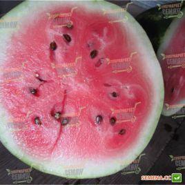 ЛС 1665 F1 (LS 1665 F1) семена арбуза тип Кримсон Свит ультрараннего 8-10 кг овал. (Lucky Seed)