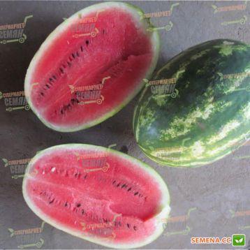 ЛС 1667 F1 (LS 1667 F1) семена арбуза раннего тип Кримсон Свит 8-12 кг (Lucky Seed)