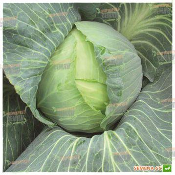 ЛС 251 (LS 251) F1 семена капусты б/к поздней 2,5-3,5 кг окр-прип. (Lucky Seed) СНЯТО С ПРОИЗВОДСТВА