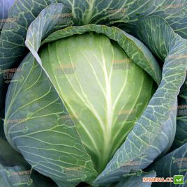 Супермаркет F1 семена капусты б/к поздней 110-120 дн 2,5-3 кг окр. (Lucky Seed)