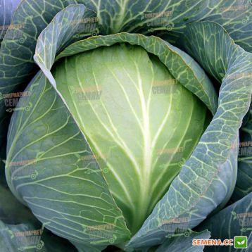 Супермаркет F1 семена капусты б/к поздней 110-120 дн. 2,5-3 кг окр. (Lucky Seed) НЕТ ТОВАРА