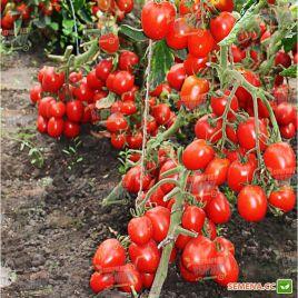 Техас F1 семена томата дет. среднераннего слив. 70-80г (Lucky Seed)