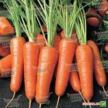 Абако F1 семена моркови Шантане (1,4-1,6) (Seminis)