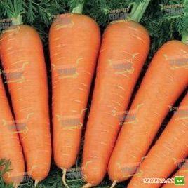Абако F1 семена моркови Шантане (1,8-2,0) (Seminis)