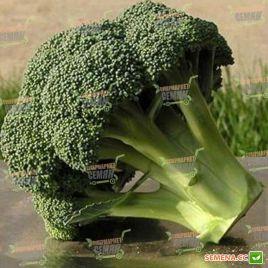 Айронмен F1 (Ironman F1) семена капусты брокколи ранней 64-81 дн. (Seminis)
