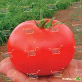 Дебют F1 (Debut F1) семена томата дет. раннего 57-60 дн. окр. 200-220г (Seminis)