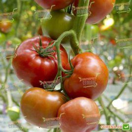 Форонти F1 семена томата индет. 250-300 гр. (DRS-Seminis) НЕТ СЕМЯН