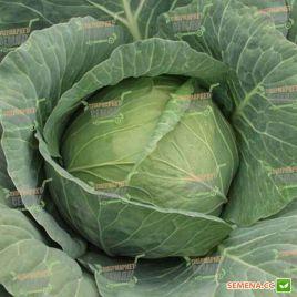 Гермес F1 семена капусты б/к ультраранней (Seminis)