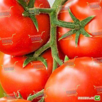 Игидо F1 семена томата индет. среднего окр. 180-200 гр. (DRS-Seminis)