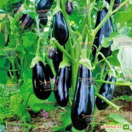 Итака F1 семена баклажана ультрараннего 85-95 дн. 200-300 гр. удл.цил. (Seminis) СНЯТО С ПРОИЗВОДСТВА