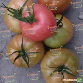 Канна 218 F1 семена томата индет. ранний окр.-прип 170-180 гр. розового (DRS-Seminis)