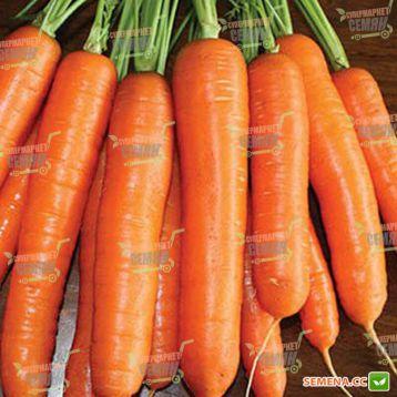 Карболи F1 семена моркови средней Нантес 115-120 дн. (Seminis) НЕТ СЕМЯН