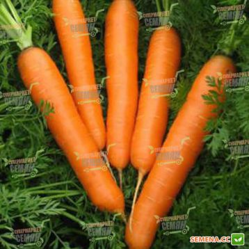 Карвора F1 семена моркови Нантес (Seminis)