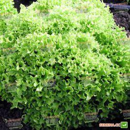 Касабелла семена салата тип Лолло Бионда (Seminis) НЕТ СЕМЯН