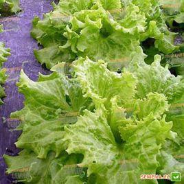 салат хагин гранд рапидс