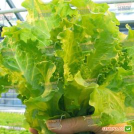 салат хьюжин гранд рапидс