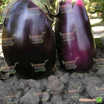 Клоринда F1 семена баклажана (Seminis)