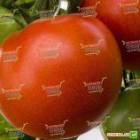 Корвинус F1 семена томата полудет. среднего 110-115 дн. окр.-припл. 200-250 гр. (DRS-Seminis)