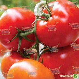Лийстелл F1 семена томата индет. (DRS-Seminis)