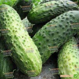 Маринда F1 (Marinda F1) семена огурца партенокарп. раннего 8-12 см (Seminis)