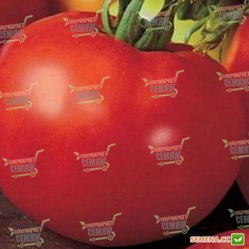 Марисса F1 семена томата индет (DRS-Seminis)