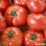 Матиас F1 семена томата индет. среднераннего 100-115 дн. окр. 250-300гр красный (DRS-Seminis)