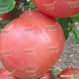Пандароза F1 семена томата индет. раннего 70 дн. окр.-прип. 210-230г роз. (DRS-Seminis) НЕТ ТОВАРА