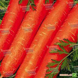Ройал Форто семена моркови Нантес (Seminis)