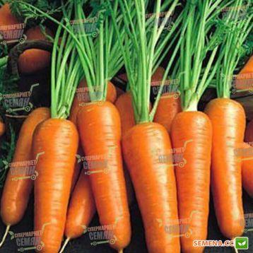 Ройал Шансон семена моркови Шантане (Seminis)