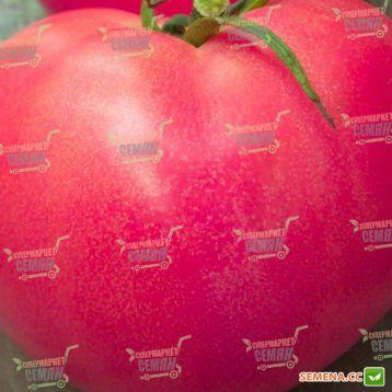 Розализа F1 семена томата дет. розового (Seminis)