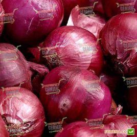 СВ 4593 F1 (SV 4593 F1) семена лука репчатого красного среднего длинного дня 118-120 дн (Seminis)