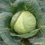 Тобия F1 семена капусты б/к средней (Seminis)
