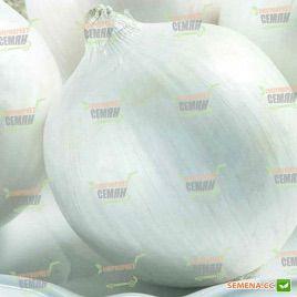 Толука F1 семена лука репчатого среднего 122 дн. белого (Seminis) НЕТ ТОВАРА