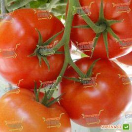 Тореро F1 семена томата индет. (DRS-Seminis)