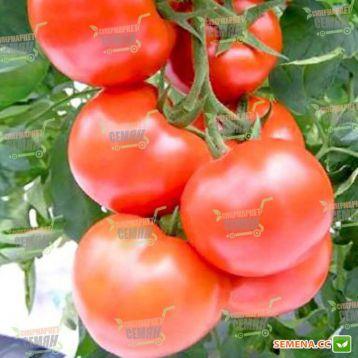 Цельсус F1 семена томата индет. (Seminis)