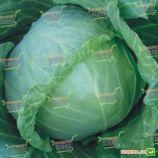 Зенит F1 семена капусты б/к ультраранней (Seminis)