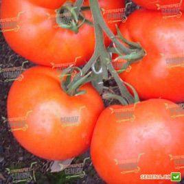 Женарос F1 семена томата индет. среднераннего 100-124 дн. окр. 220-270 гр. (DRS-Seminis)