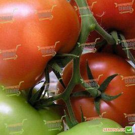 Жеронимо F1 семена томата индет. (DRS-Seminis)