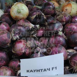 Каунтач F1 семена лука репчатого красного среднего 115-120 дн. длинн. дня (Bayer Nunhems)