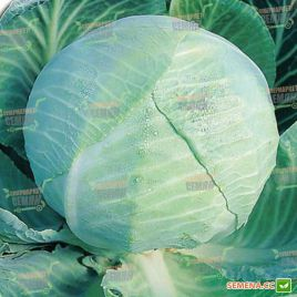 Амагер семена капусты б/к поздней 180 дн. 2,2-3,5 кг (Semenaoptom)