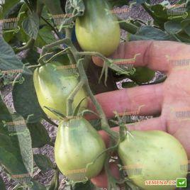 Бедуин (Черная груша) семена томата индет. черного 100-120г (Semenaoptom) СНЯТО С ПРОИЗВОДСТВА