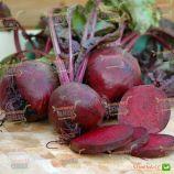 Бікорес насіння буряку столового окр. (Semenaoptom)