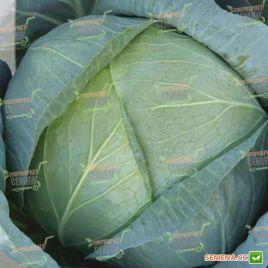Бирюза семена капусты б/к поздней 130 дн. 3,5-5 кг (Semenaoptom)