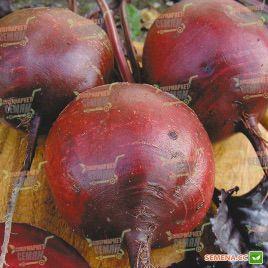 Бордо семена свеклы столовой Италия (Semenaoptom)