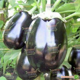 Черный красавец 2 по цене одного семена баклажана (Semenaoptom)