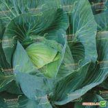 Экстра F1 семена капуста б/к поздней (Semenaoptom)