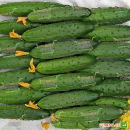 семена огурца эстафета f1
