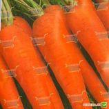 Флакко семена моркови Флакке Италия (Semenaoptom)